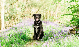 laura jane photography, essex canine photographer, kent canine photographer, suffolk canine photographer, uk canine photographer, natural dog photographer, animal photographer